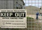 В Великобритании зафиксирована вспышка птичьего гриппа
