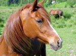 Лошадь с мировым именем оказалась в доме престарелых