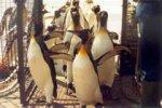 Из-за птичьего гриппа в Японии отменили парады пингвинов