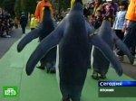Пингвины испугались птичьего гриппа