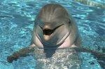 ВМС США будут использовать дельфинов для борьбы с терроризмом
