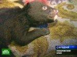 В Хабаровске появились медвежие ясли-сад