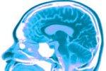 Ученые обнаружили регенерацию нейронов в мозге взрослого человека