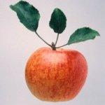 Яблоки – отличный продукт для здоровья мозга