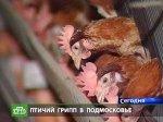 Очаг птичьего гриппа обнаружен в третьем районе Подмосковья