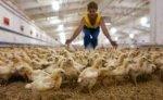 Власов: вероятность заражения россиян птичьим гриппом очень низка