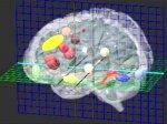 Человеческий мозг показали во всех деталях