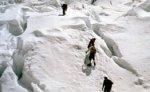 В Красной Поляне из-за лавинной опасности приостановили поиск людей