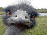 Немецкие подростки довели страуса до импотенции
