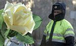 В Тюмени сотрудники ГАИ нарушившим правила женщинам дарят цветы