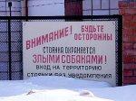 В России признают опасными сотню пород собак