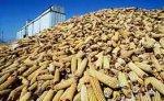 Бразилия готовится занять место США на рынке экспорта кукурузы и сои