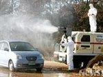 """В Южной Корее зафиксирована новая вспышка """"птичьего гриппа"""""""