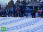 В гонках на собачьих упряжках победили скандинавы