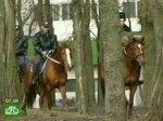 Конная милиция наведет порядок в Ростове-на-Дону