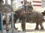 Жителям Бангладеш слон заменил бульдозер