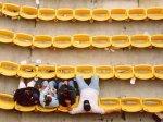 Термиты погрызли кресла футбольного стадиона в Чили