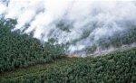 В Таиланде еще две провинции объявлены зонами бедствия из-за пожаров