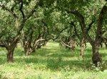 В районах Ростовской области высадят по 70 деревьев