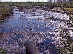 Минприроды: Неочищенными стоками загрязняется большинство водных объектов России