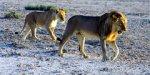 В Намибии можно будет посетить ночное сафари