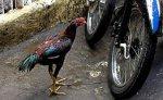 Двое жителей Индонезии скончались, возможно, от птичьего гриппа