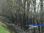 В администрации разрабатывают меры борьбы с лесными пожарами