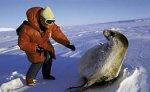 Число тюленей, погибших на побережье Каспия, достигло 127