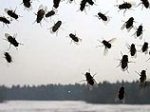 Китайский пенсионер объявил войну мухам в олимпийском Пекине
