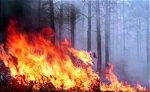 В Сибири горят леса на площади более тысячи гектаров