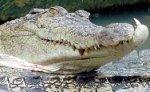 Тайваньскому ветеринару успешно пришили откушенную крокодилом руку