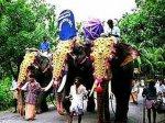 На защиту слонов встал … суд