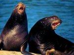Морской лев сломал челюсть австралийской школьнице