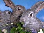 Кролики перекрыли шоссе между Будапештом и Веной
