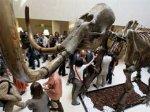 На торгах Christie's проданы мамонт и шерстистый носорог