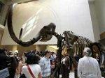 Росохранкультура проследит путь мамонта из Сибири до аукциона Christie's