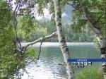 В парке 'Юность' города Волгодонска появилась березовая аллея