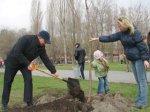 На Пушкинской набережной в Таганроге высадили 80 деревьев