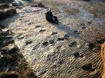 Туристы спешат увидеть следы динозавров