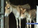 В Таганроге детей больных церебральным параличом лечит семилетний пони