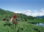 Казахстанский чабан разорвал пасть волку
