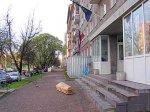К эстонскому консульству в Пскове принесли гроб