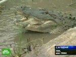 Гигантский крокодил устроил затор на автостраде