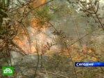 Лесные пожары уничтожают сибирскую тайгу