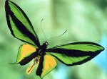 Москвичи уничтожили экспозицию экзотических бабочек