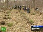 Японцы возрождают хабаровские леса