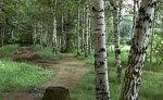 Пропавшие в Хабаровском крае девочки найдены