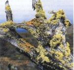 Все о грибах: Грибы-симбионты