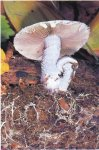Все о грибах: структура и размножение грибов