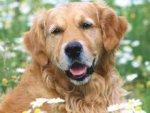 Американский адвокат представит в суде интересы собаки